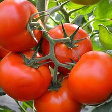 Семена томата Тобольск F1 (250 сем.) Bejo