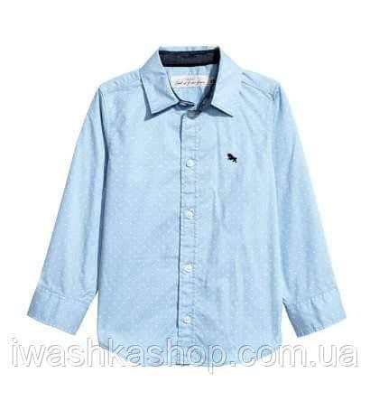 Блакитна сорочка в дрібний горох для хлопчика 3 - 4 років, H&M р. 104