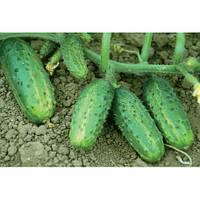 Семена огурца Темпеста F1 100 гр Nickerson-Zwaan