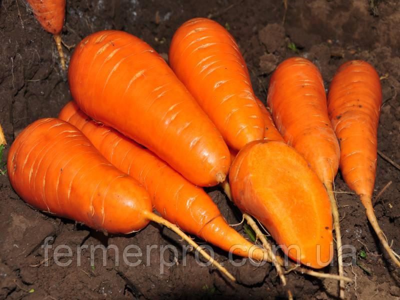 Семена моркови Шантане ред кор 5 кг  Гриффатон