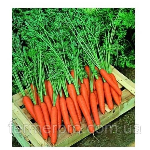 Семена моркови Престо F1 100000 семян  Vilmorin