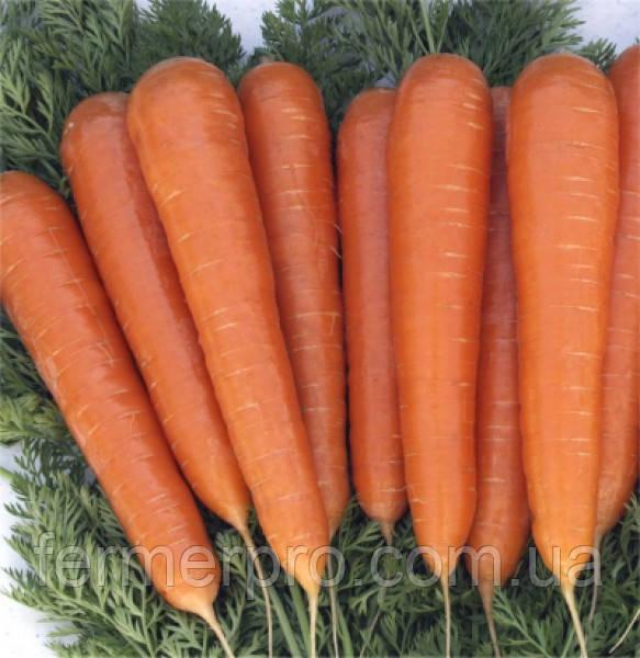 Семена моркови Музико F1 100000 семян  Vilmorin