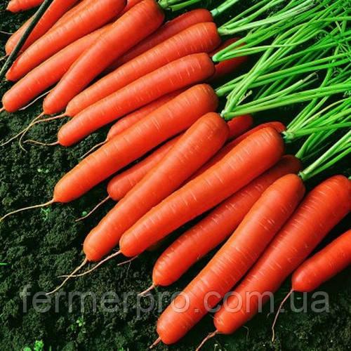 Семена моркови Темпо F1 25000 семян  Vilmorin
