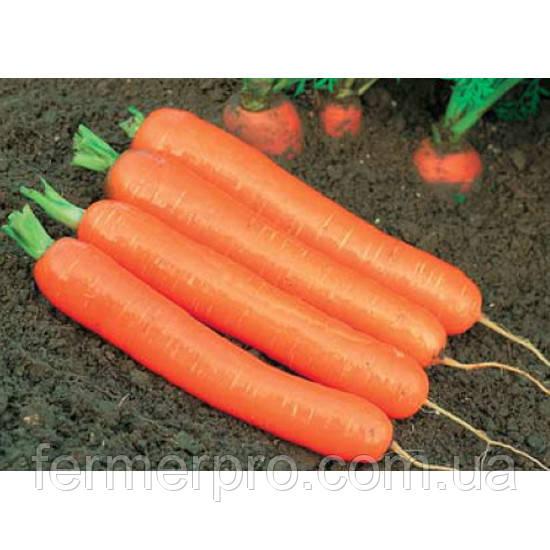 Семена моркови Ексельсо F1 25000 семян  Vilmorin