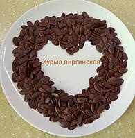 Семена хурмы виргинской