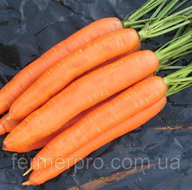 Семена моркови Сопрано F1 100000 семян (VD)  Vilmorin