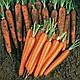 Семена моркови Сопрано F1 100000 семян (VD)  Vilmorin , фото 2