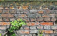 Фотофон виниловый стена Листья