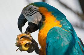 Витаминные добавки и лакомства для птиц