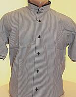 Мужская рубашка с коротким рукавом Passero стойка в полоску