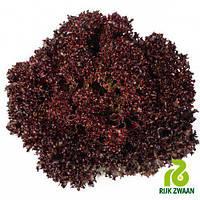 Семена салата Вилбур (1000 драже)