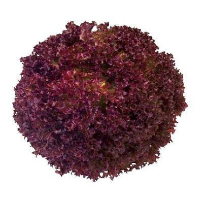 Семена салата Конкорд (1000 сем.)