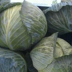 Семена капусты б/к Лагрима F1 1000 сем. (калиброванные)