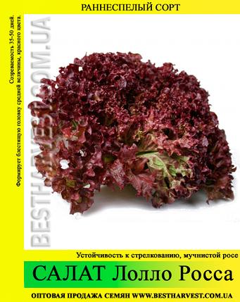 Семена салата «Лолло Росса» 100 г, фото 2