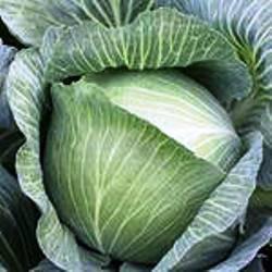 Семена капусты б/к Муксума F1 (2500 сем.)