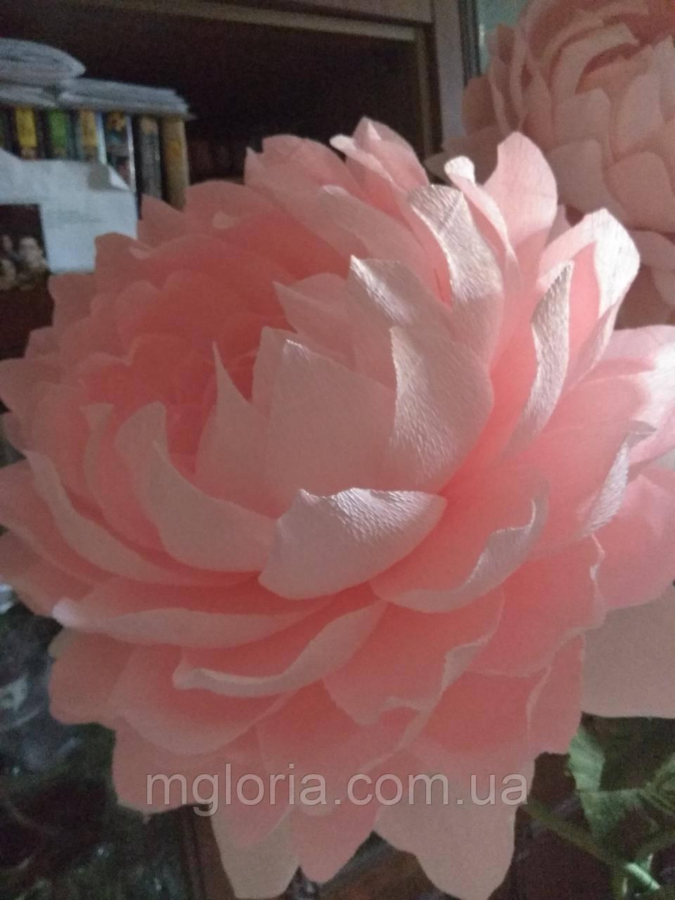Ростовой пион розовый