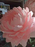 Ростовой пион розовый, фото 1