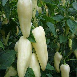 Семена перца сладкого Сноувайт F1 (100 сем.)