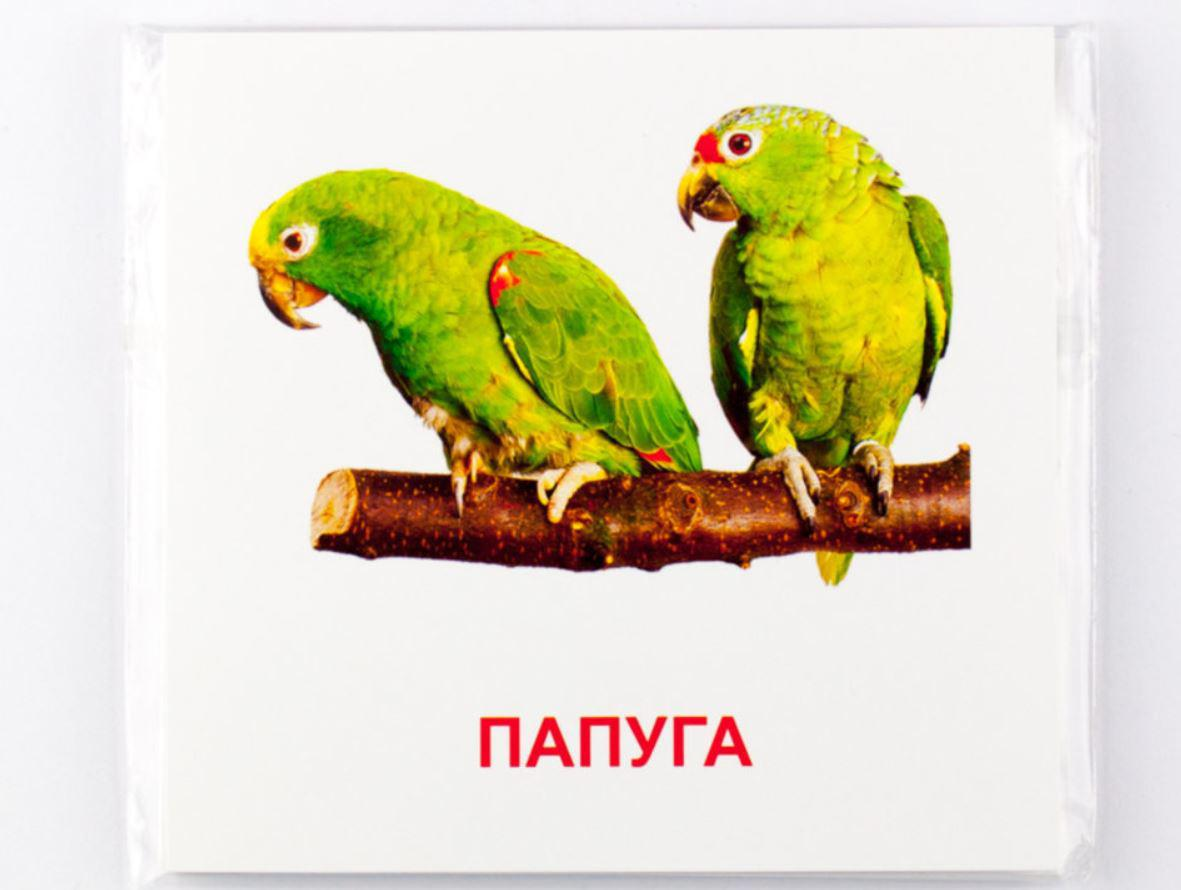 """Картки """"Птахи"""", 16 українсько-англійських міні-карток, 11 х 11 см"""