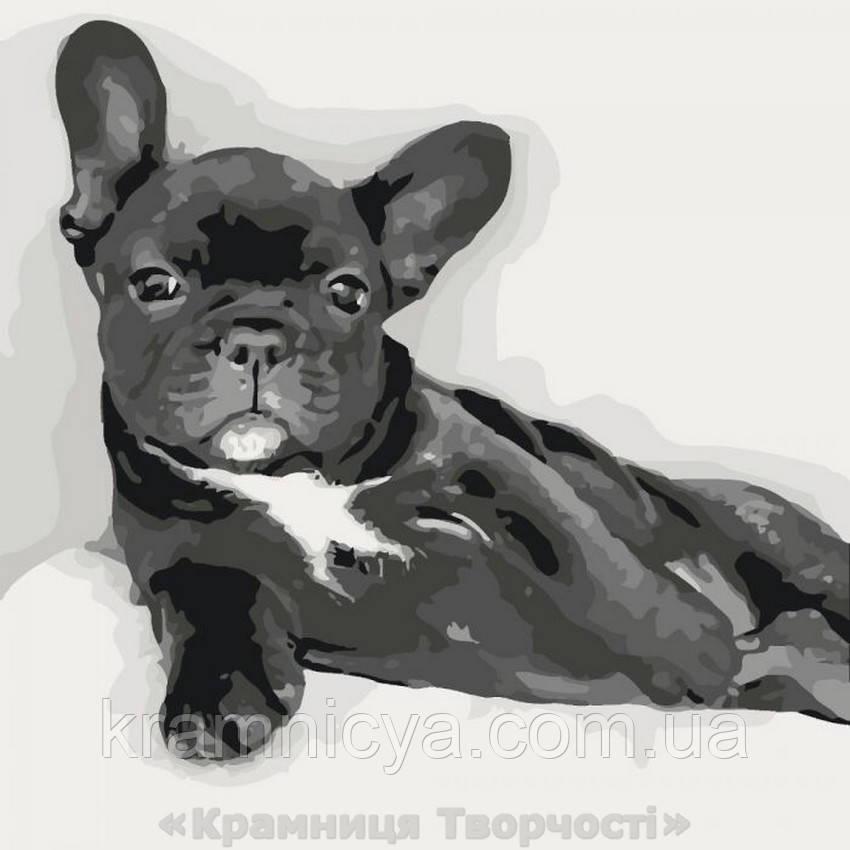 Картина по номерам Сладкий малыш, 40х40 (КНО2488)