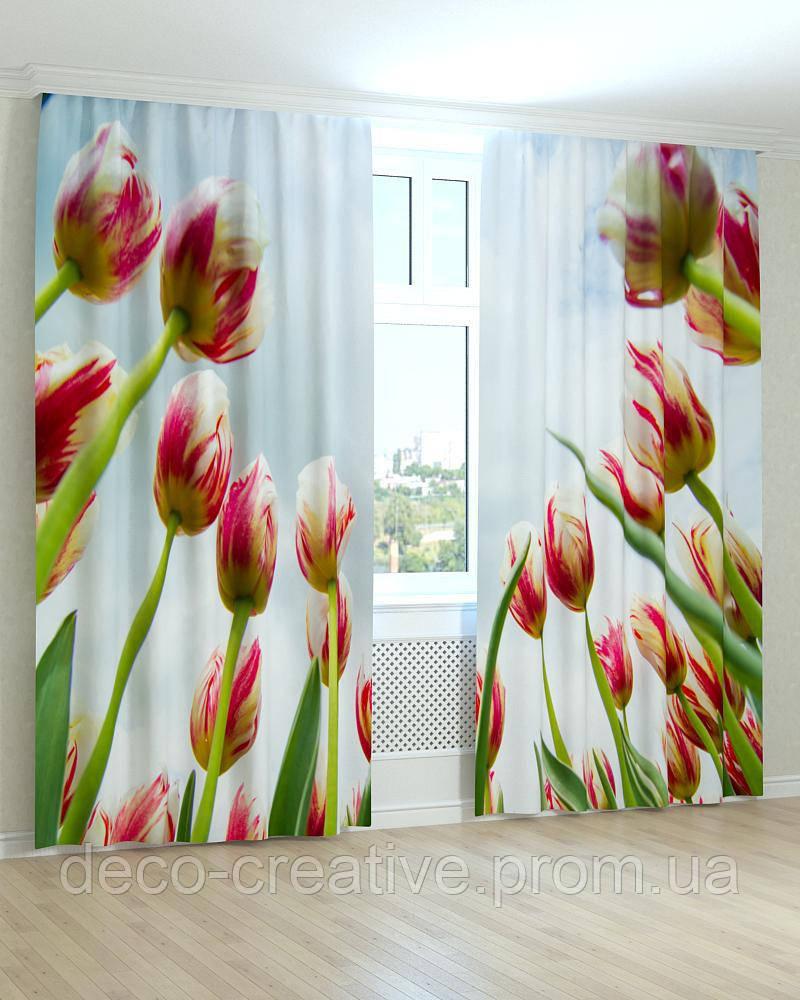 Фотошторы тюльпаны