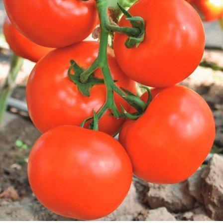Семена томата Чинто F1 (100 сем.)