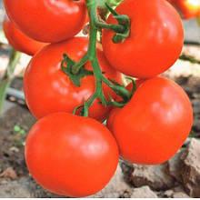 Насіння томату Чинто F1 (100 сем.) Rijk Zwaan