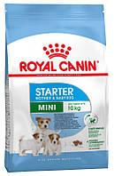 Корм для щенков мини-пород Royal Canin Mini Starter