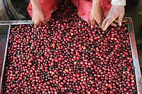 Кава Мексика Баррел (Mexico Barril Honey)