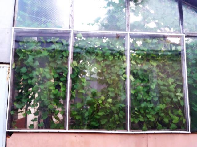 Так выглядят окна теплицы после монтажа плёнки