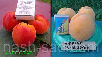 Саженцы абрикоса Харостар + персик Нерине