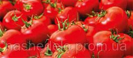 Семена томата GS - 12 F1 2500 семян Syngenta