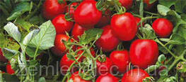 Намиб Ф1 2500 сем. томат Сингента