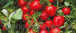 Семена томата Намиб F1 2500 семян Syngenta