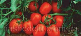 Семена томата Чибли F1 2500 семян Syngenta