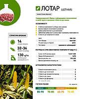 Семена кукурузы Кукурудза Лотар 80000 н.