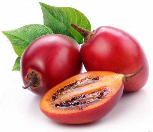 Саженцы тамарилло или томатное дерево (Solanum betaceum)