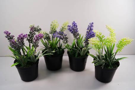 Цветы в вазончивах, фото 2