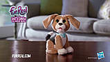 РУССКОЯЗЫЧНЫЙ Говорящий щенок Чарли FurReal Friends / FurReal Chatty Charlie the Barkin' Beagle, фото 3