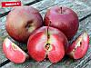 Яблоня красномясая Бая Мариса