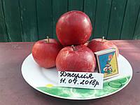 Саженцы яблони Джулия (Чехия), фото 1