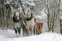 Готовь сани летом или зимняя прогулочная коляска