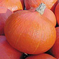 Семена тыквы Оранж Саммер F1 (500 сем.)