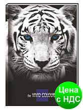 """Блокнот """"Vivid Colours"""" А5, 80 листов, карт./порол.,клет., """"тигр""""  CF21200-02"""