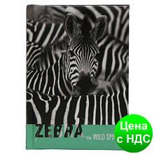 "Блокнот ""Wild Spirit"", А6, 80 арк, бумага 65 г/м2, клетка, ""Зебра""  CF21201-21"