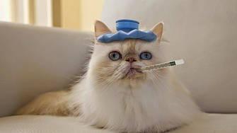 Лечебный влажный корм и консервы для кошек