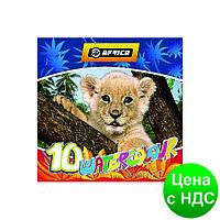 """Краски акварельные медовые 10 цветов """"Africa""""  (акварель медовая) E60111"""