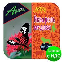 """Краски акварельные медовые 24 цвета """"Africa"""" (акварель медовая) E60125"""