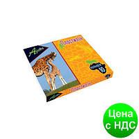 """Пластилин """"Africa"""", 10 цветов, 200г, картон E60607"""