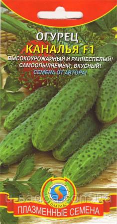 Семена огурцов Огурец Каналья F1  10 штук  (Плазменные семена)